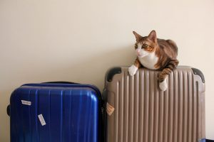 ペットシッターらむ スーツケースと猫